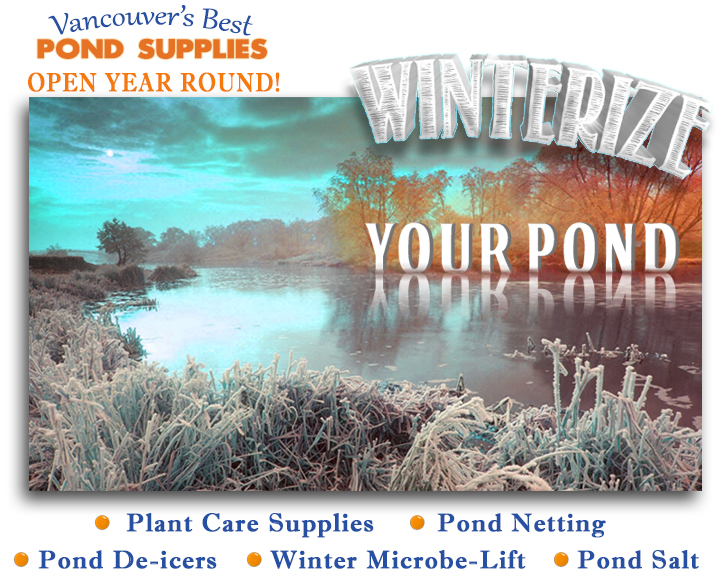 winter-ad-for-website